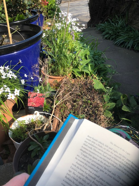 Plants in pots, a path, and a close up of a large hardback novel.